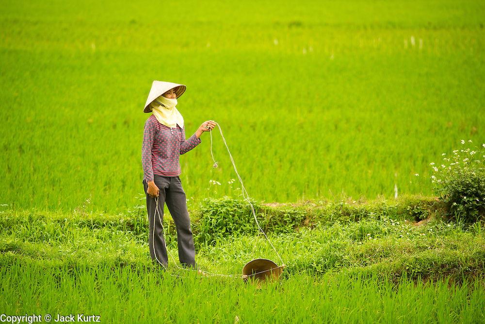 04 APRIL 2012 - HA LONG, VIETNAM:   A Vietnamese woman in a rice paddy near the city of Ha Long in northern Vietnam.   PHOTO BY JACK KURTZ