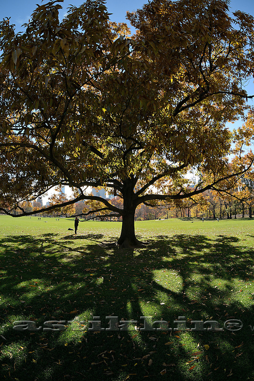 Long Shadows from Tall Trees in a Central Park. Manhattan USA.