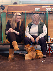 © Licensed to London News Pictures. 11/03/2012. Two Norfolk terriers sit with their owners at the preparation area of the terrier show at the 2012 Crufts final at the Birmingham NEC Arena.  With over 28,000 dogs taking part the tension is high as the competition draws towards the prestigious title of  Best in Show. Photo credit: Alison Baskerville/LNP