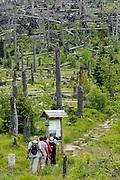 Wanderer auf dem Grenzsteig, toter Wald, Dreisesselberg, Bayerischer Wald, Bayern, Deutschland   walkers, Mt. Dreisessel, Bavarian Forest, Bavaria, Germany