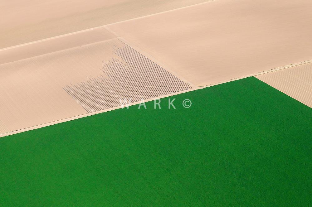green crop field next to dirt fields