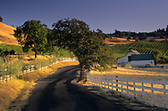 Morning light over country road near Gerber Vineyards, Murphys, Calaveras County, California