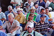 31 JULY 2009 --  BUCKEYE, AZ: Bidders at the auction on the former Pylman Dairy Farm in Buckeye. The auction was handled by Overland Stockyards from Hanford, CA. The Arizona dairy industry is struggling to survive the worst milk economy some have ever seen. Due to the global recession, overseas demand for Arizona dairy products has plummeted, forcing prices down while production costs have stayed stable or gone up. For every $1 dairymen earn from milk sales, it cost them $1.50 to produce the milk. Photo by Jack Kurtz