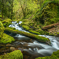 Gorton Creek in the Columbia River Gorge, on the trail to Emerald Falls