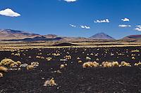 PAMPA NEGRA, SUELO NEGRO DE PIEDRAS VOLCANICAS Y ESTEPA DE COIRONES (Festuca gracillima - fam. poaceas), VOLCAN PAYUN LISO (3.833 m.s.n.m.) AL FONDO, RESERVA PROVINCIAL LA PAYUNIA (PAYUN, PAYEN), MALARGUE, PROVINCIA DE MENDOZA, ARGENTINA (PHOTO © MARCO GUOLI - ALL RIGHTS RESERVED)