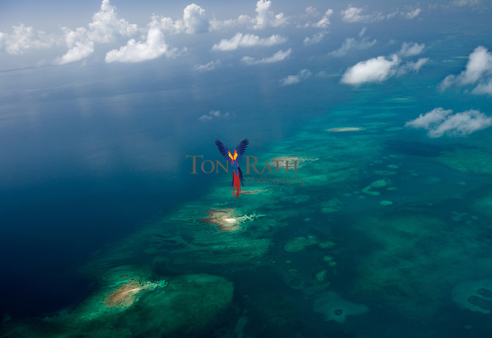 The Belize Barrier Reef and Spanish Lookout Caye, part of the Drowned Caye off Belize City, Belize