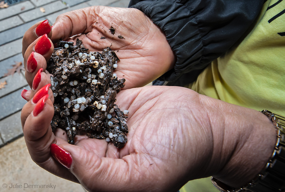 Sharon Lavinge, founder of RISE St. James holding nurdles mixed with natural matter found in Texas and delvieled to Louisiana , from a Formosa plant.  The nurdles (small plastic pellets, used to make plastic goods, that pollute the environment) were collected by Diane Wilson and others, near a Formosa plant in Texas that discharged them into waterways. Wilson used the nurtles in a court case against Formosa that resulted in a $50-million settlement the company.