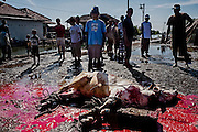 A cow has been slaughtered by Indonesian muslim people as they celebrate Eid Al-Adha while frequently flood hitting the land.