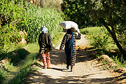 KELAAT M'GOUNA, MOROCCO - 14TH MAY 2016 - Rose farmers walk through the paths leading through the rose fields in Kelaat M'Gouna, Dades Valley - also known as the 'Valley of Roses' - Southern Morocco.