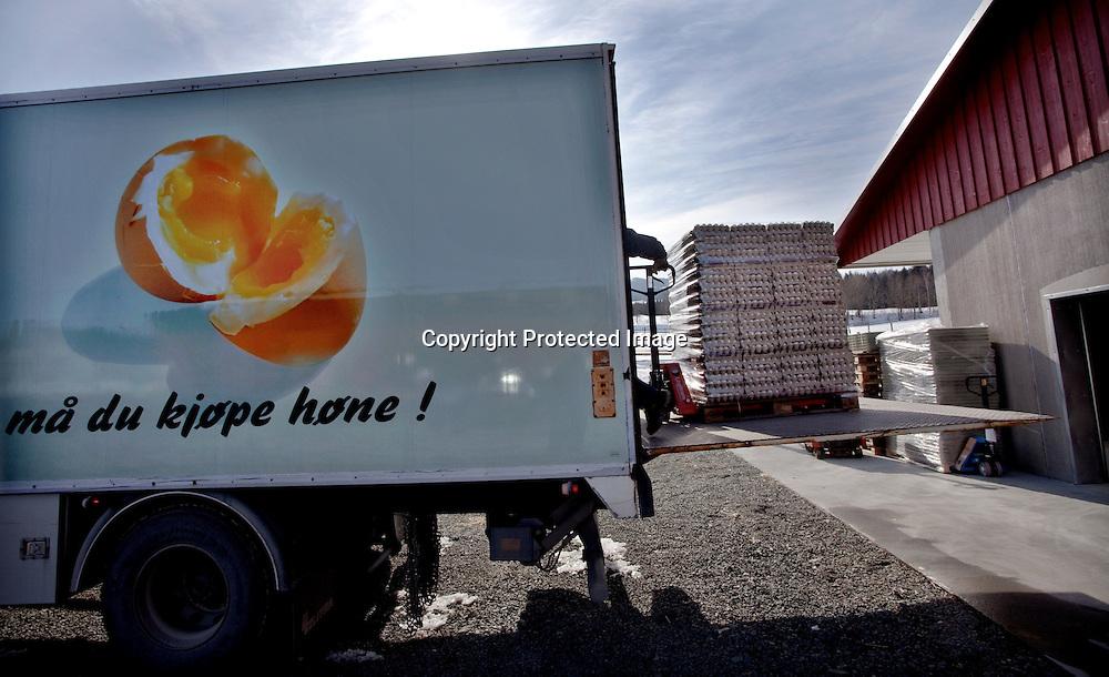 26032009, Totenvika. EGGTRANSPORT: 50 000 egg fra de siste dagers verping rulles inn på lastebilen fra Toten eggpakkeri...Foto: Daniel Sannum Lauten/VG