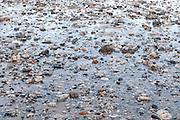 Low Tide Pebbles