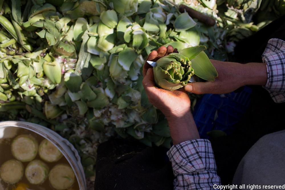 Peeling artichokes (artichoke hearts bottom on the left) at Datca Market