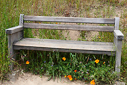 Wooden bench along a trail surrounded by tall grass and wild flowers, Russian Ridge Open Space hiking trails, Palo Alto, California, United States of America.