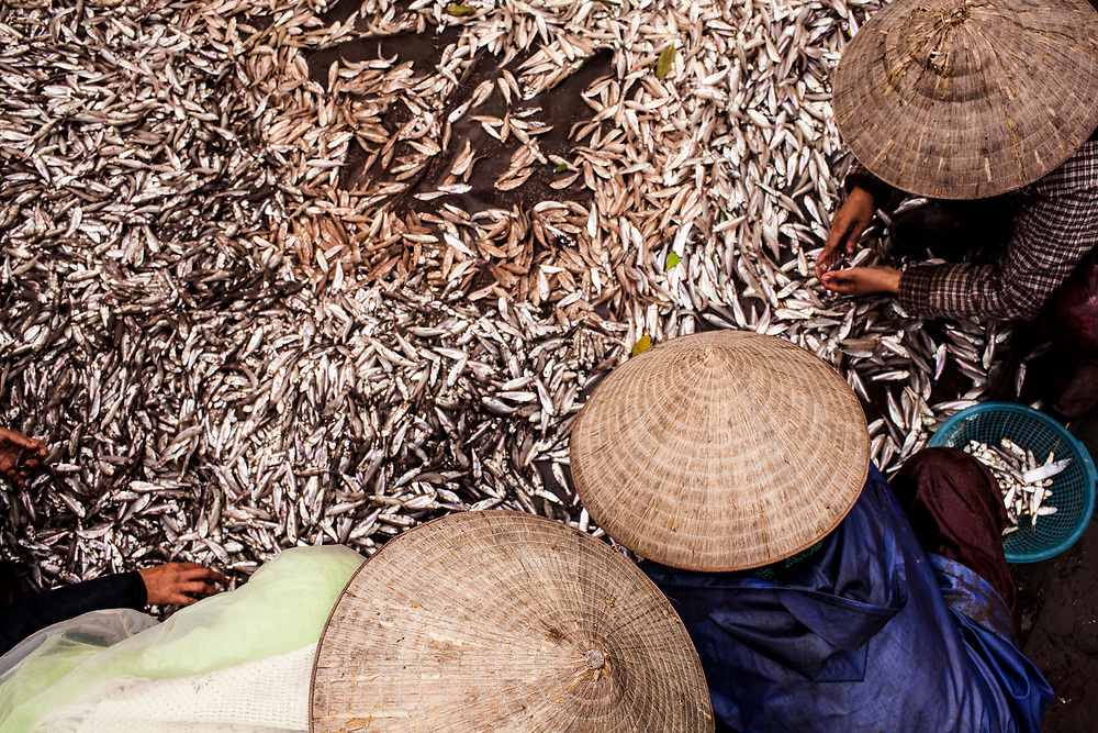 Three fishermen separate their daily catch on the shores of the Gulf of Tonkin, in northern Vietnam.
