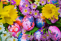 Switzerland. Springtime. Close -up of colored easter eggs, daffodil flowers and primroses.
