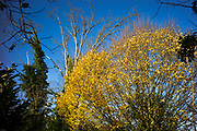 Ray Mill Island, Maidenhead. UK. General View on a sunny day of Ray Mill Island, Great Britain. Looking along where the waterside path runs next to the water, with the late sun picking up a variety of Autumnal colours in the trees and bushes. <br /> <br /> Thursday 23/11/2017 <br /> <br /> © Peter SPURRIER,<br /> <br /> Leica Camera AG LEICA M (Typ 262). ISO 100  f6.8  Lens 21mm   28.6MB