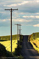 Rural road, telephone poles and rolling hillside of wheat and cumulus clouds  Palouse region of eastern Washington.