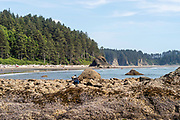 People enjoy Second Beach, Olympic National Park, Washington, USA.