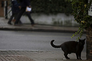A black cat pauses on a street corner after crossing the road, on 20th December 2017, in London, England.