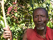 Dercha Mekonnen, 80 years old ,pictured in front of some coffee. His wife has been learning how to grow vegetables from their neighbouring farmer.