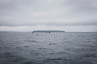 Two women and a man paddling sea kayaks from Lincoln Park in West Seattle across the Puget Sound towards Blake Island on a cloudy morning, Washington State, USA.