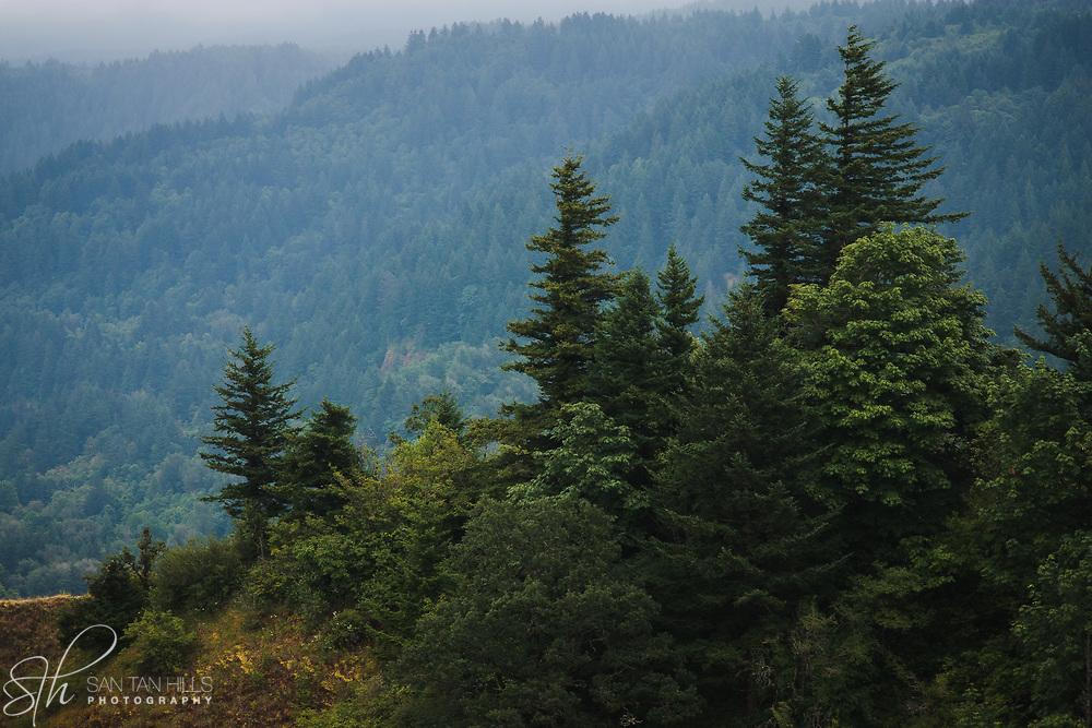 Trees along ridge of Columbia River Gorge