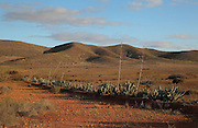 Desert landscape near el Campillo, with agave pita plants, in the Cabo de Gata-Nijar Natural Park, Almeria, Andalusia, Southern Spain. The park includes the Sierra del Cabo de Gata mountain range, volcanic rock landscapes, islands, coastline and coral reefs and has the only warm desert climate in Europe. The park was listed as a UNESCO Biosphere Reserve in 1997 and a Specially Protected Area of Mediterranean Importance in 2001. Picture by Manuel Cohen
