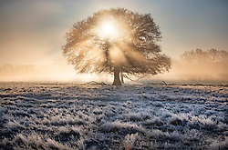 © Licensed to London News Pictures. 06/02/2020. London, UK. The sun rises over a misty Bushy Park in south west London. After a period of clear and cold days, rain and wind are forecast for the next few days as the UK feels the effects of Storm Ciara. Photo credit: Peter Macdiarmid/LNP