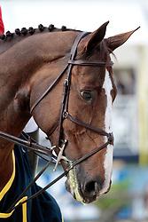 Ward Mclain (USA) - Sapphire <br /> Gran Premio - 78° Piazza di Siena<br /> Rome 2010<br /> © Hippo Foto - Beatrice Scudo