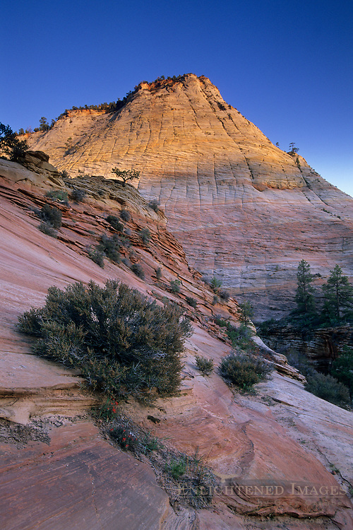Sunset light on Checkerboard Mesa, Zion - Mt. Carmel Highway, Zion National Park, UTAH