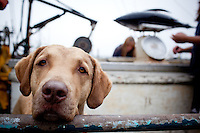 Dog on fishing boat on the dock at Newport Bay harbor in Newport, Oregon
