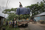 It has been impossible for residents of the enclaves to work in any formal office in the towns either because of their lack of legal status or their lack of basic education. As a result most work in the informal economy such as here helping to load bananas on to truck bound for Dhaka for cash.<br /> <br /> On July 31st 2015 the enclaves that formed one of the world's most complicated borders were officially absorbed in to the countries that surrounded them in a land-mark land swap between India and Bangladesh. The people that lived in them will finally receive citizenship.<br /> <br /> Enclaves are small pockets of sovereign land completely surrounded by another sovereign nation. Approximately 160 enclaves, known as chitmahals, exist on either side of the India-Bangladesh border. For 68 years the 50,000 plus inhabitants of these enclaves have lived a difficult existence, stranded from their home nation and ignored by the country that surrounds them. <br /> <br /> In theory even leaving their enclaves is illegally crossing an international border and for decades it has been very difficult for them to receive even the most basic of rights whether education or health. Even the police have no jurisdiction in the enclaves leaving them essentially lawless.