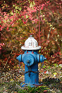 Blue Fire Hydrant in forest.