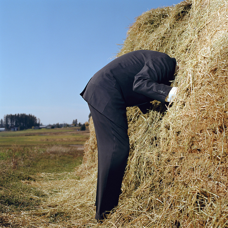 Man sticking his head in haystack, side view