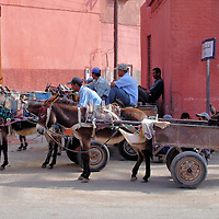 Mules Pulling Carts in Marrakech, Morocco<br /> In many tourist-centric cities around the world, a common attraction is a horse-drawn buggy ride. But in Marrakech, a common site is mules pulling two-wheeled carts. This symbiotic relationship between workers and their beasts of burden has functioned for generations so many Moroccans maintain the tradition. Besides, navigating donkeys and horses through the narrow, winding streets is a lot easier than driving a car or truck.