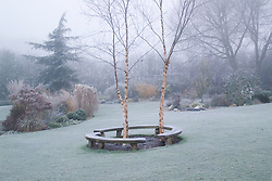 Curved bench seats around three birch trees - Betula nigra 'Heritage' on a frosty, foggy morning in John Massey's garden. Design: John Massey, Ashwood Nurseries