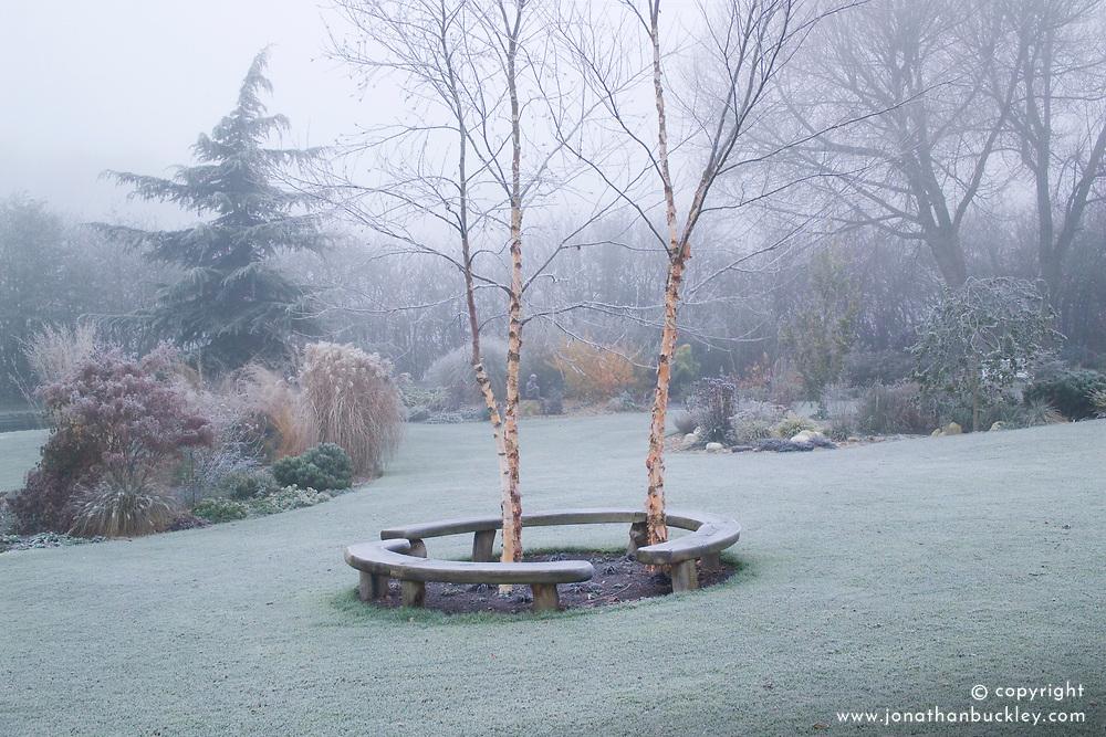 Curved bench seats around three birch trees - Betula nigra 'Heritage' on a frosty, foggy morning in John Massey's garden. Design: John Massey, Ashwood Nurseries