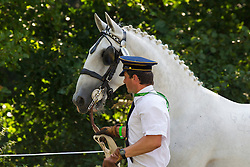 Jiri Nesvacil Jr, (CZE), Generale Aluma II, Generale Pastorella, GSS Amiga, GSS Ecrasee, Rudolfo Enamorada VI - Horse Inspection Driving - Alltech FEI World Equestrian Games™ 2014 - Normandy, France.<br /> © Hippo Foto Team - Leanjo de Koster<br /> 25/06/14