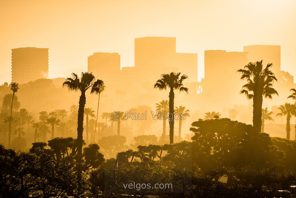 Picture of Newport Beach skyline morning sunrise with office buildings and palm trees. Newport Beach is an affluent beach community on Orange County Southern California.
