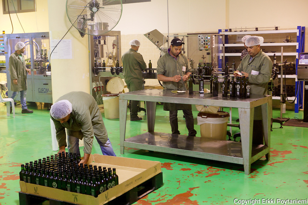 Bottling Fair Trade organic olive oil at Canaan Fair Trade.