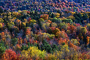 Abstract of colorful autumn trees, Vermont, USA