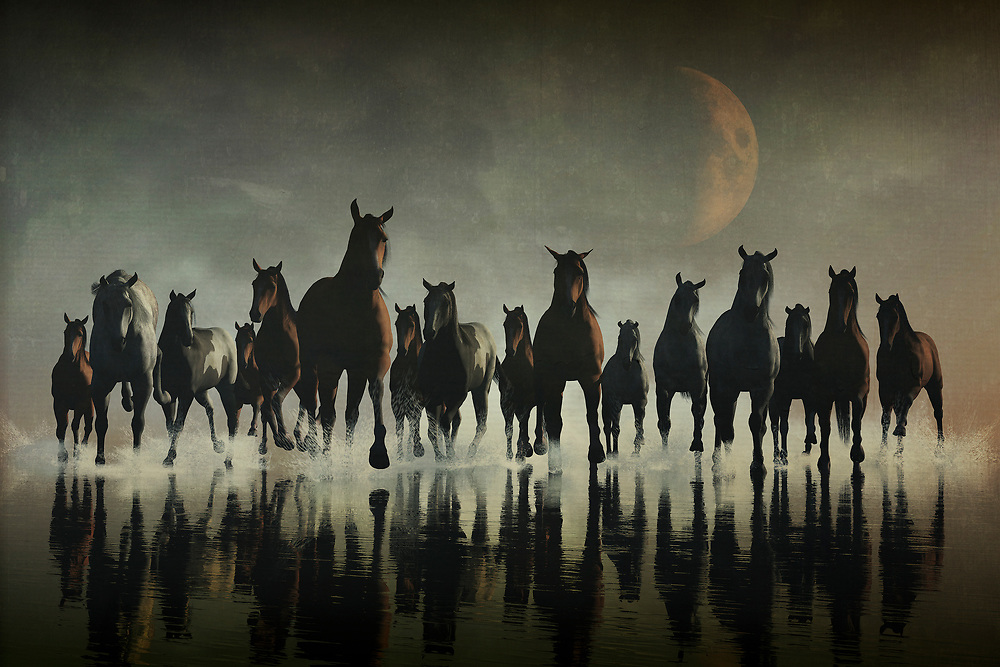 A glorious, breathtaking stampede of horses in the sea! This is a perfect scene for not only those who like horses, but for those who appreciate the incredible energy and power of animals. A single animal can prove to be powerful enough. Bring together the energy of several examples of the same animal, and you have boundless potential for that energy and power. Artists have captured this in their works for years, and this piece is no exception. Available in several different prints, or as an interior décor product, such as duvet covers, t-shirts, or shower curtains.