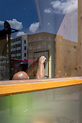 Seen through a front window of a bar on the Clerkenwell Road, a bald-headed workman tightens screws on a picture frame, on 29th July 2019, in London, England