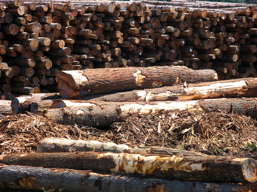Stacks of logs in Western Washington waiting to be milled.