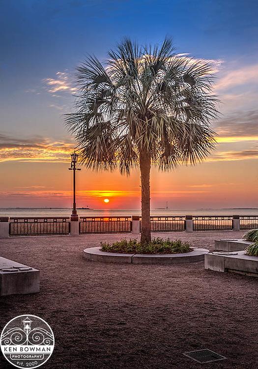 Waterfront Park sunrise palmetto tree.