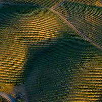 Aerial of Vineyards in Napa Valley, California