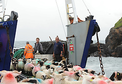 Sheep arrive at Roonagh Pier from Clare Island Co Mayo as they are taken to the mainland.<br /> Photo taken August 2016.<br /> Pic Conor McKeown