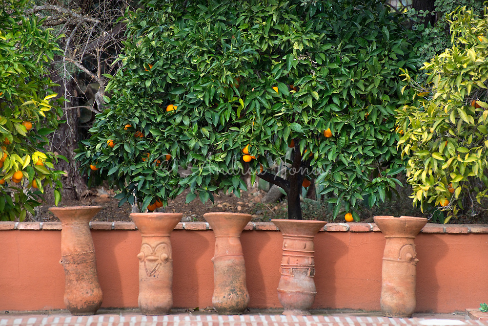 Citrus sp (orange) trees and row of terracotta containers<br /> <br /> <br /> photography &copy; Andrea Jones