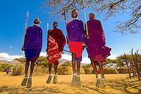 Maasai tribe men doing Adumu (Traditional Jumping Dance), Manyatta village, Ngorongoro Conservation Area, Tanzania