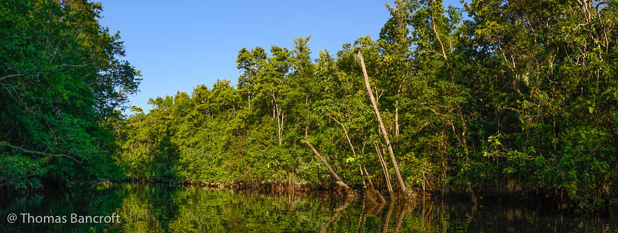 The mount of Barratt Creek along the Daintree River.